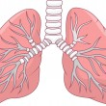 Illustration of Human lung...