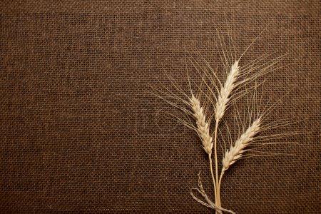 épis de blé sur toile brune, Hesse, texture de la toile de jute