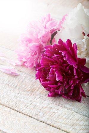 Foto de Tarjeta postal con flores frescas peonía y lugar para el texto. - Imagen libre de derechos