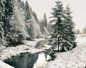 Panorama of a winter morning in the Carpathians