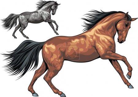 Illustration pour Illustré beau cheval isolé sur fond blanc - image libre de droit