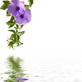 reflet de la fleur
