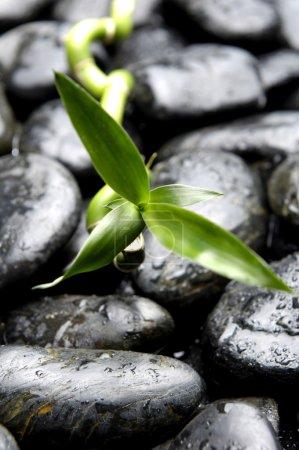 Still life with leaf