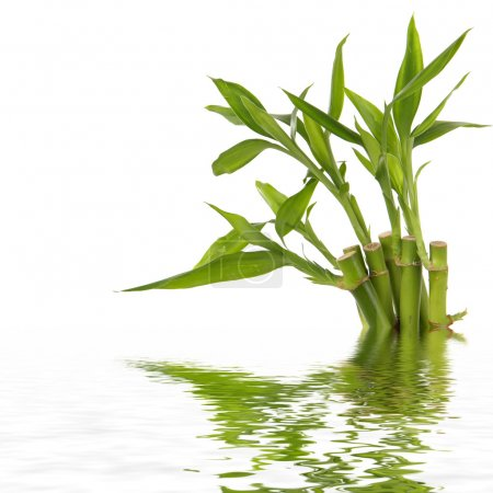 Photo for Spa still life with bamboo - Royalty Free Image