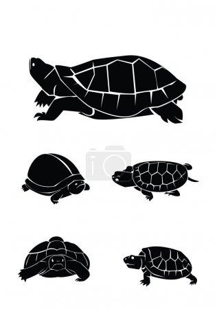 Vector illustration of turtle set