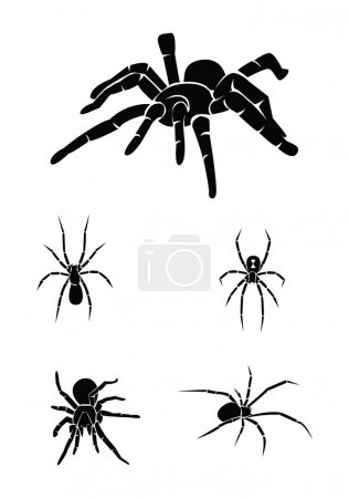 Vector illustration of spiders set