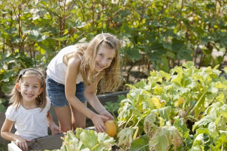 Gardening. Caucasian sisters picking pumpkins together in a garden or pumpkin patch