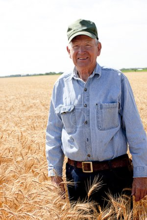 Hardworking old farmer stands in wheat field
