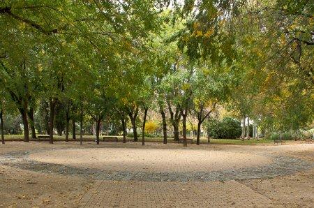 Photo pour Arbres dans le parc, scène écologique - image libre de droit