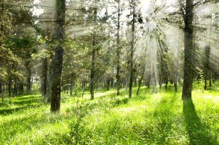 Photo pour Ecologie scene.forest - image libre de droit