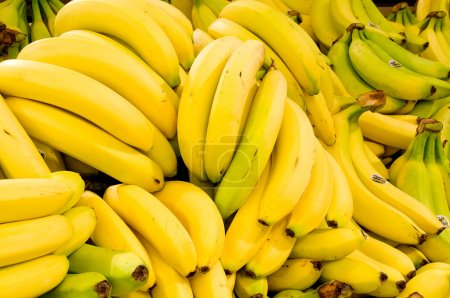 Photo for Bananas - Royalty Free Image