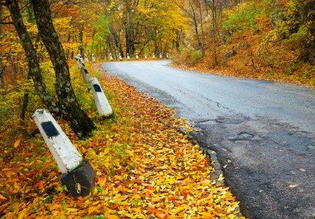 Photo pour Route en bois d'automne. Composition de la nature - image libre de droit
