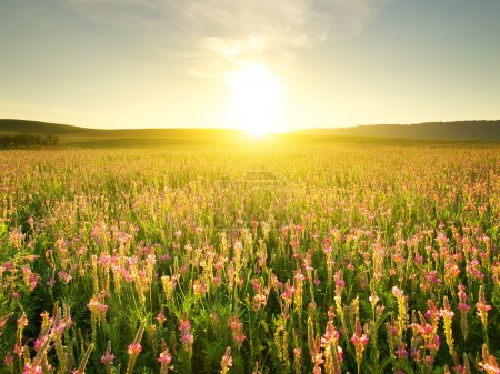 Photo pour Champ avec des fleurs pendant le coucher du soleil. Beau paysage - image libre de droit