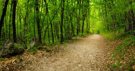 Photo for Road in the green forest. Beautiful landscape - Royalty Free Image