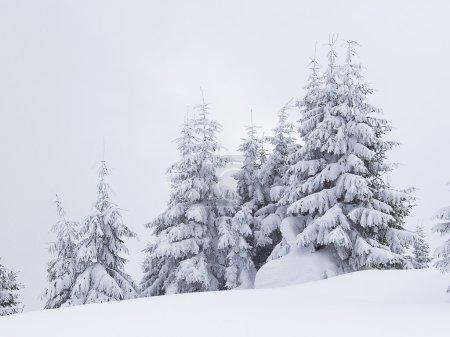 Photo pour Arbres gelés au cours du temps neigeux. paysage d'hiver magnifique - image libre de droit