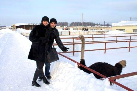 Couple feed ostrich in farm