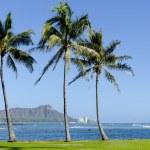 Постер, плакат: Ala Moana Beach Park in Waikiki Hawaii