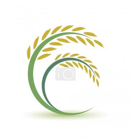 Illustration for Rice on white background - Royalty Free Image