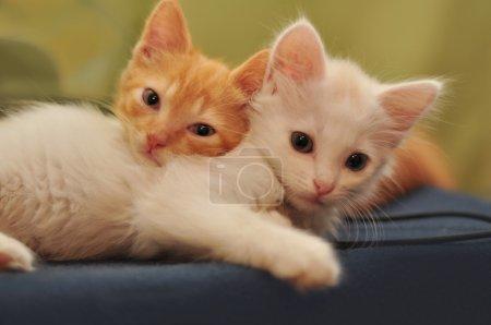 Photo pour Deux chatons - image libre de droit