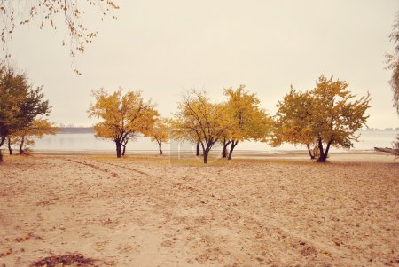 Photo for Beautiful autumn landscape on beach - Royalty Free Image