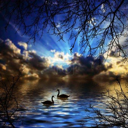 Photo pour Deux cygnes sur le lac. Beau paysage - image libre de droit