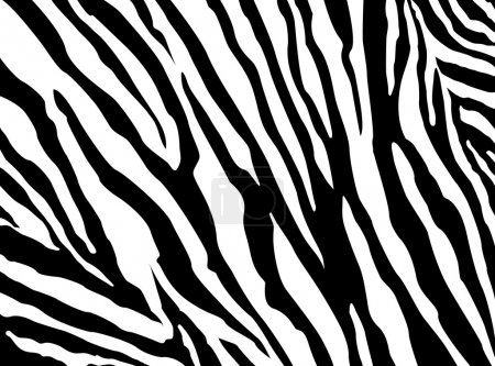 Zebra Pattern vector. EPS 10