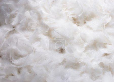 Photo pour Gros plan sur la pile de plumes duveteuses blanches - image libre de droit