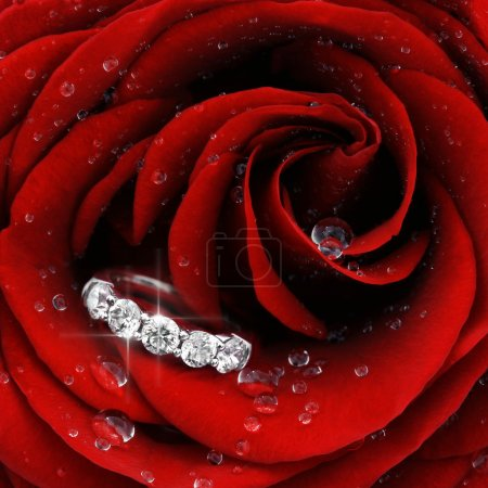 Foto de Primer plano macro de rosa roja con gotas de rocío y hermoso anillo brillantes - Imagen libre de derechos