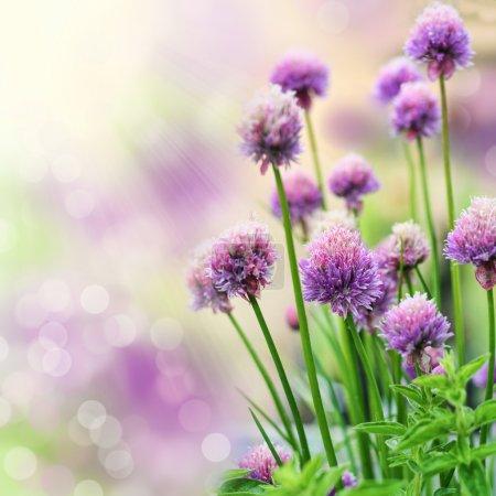 Photo pour Floraison d'herbes sur fond de bokeh magnifique. DOF très peu profond . - image libre de droit
