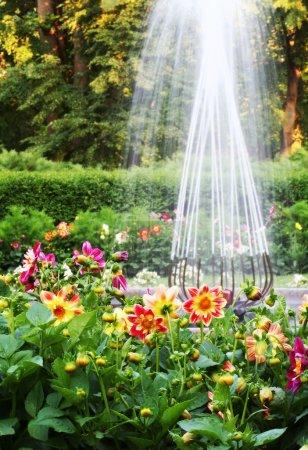 Photo pour Beau jardin formel avec fleurs de dalhia et fontaine . - image libre de droit