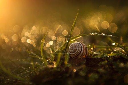 Photo pour Photo prise au coucher du soleil. - image libre de droit