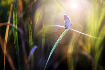 Photo for Photo taken in summer - Royalty Free Image