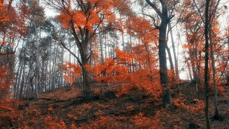 Photo pour Forêt d'automne - image libre de droit