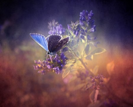 Vintage butterfly. Antique style photo with grunge...