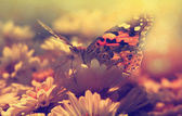 Butterfly in sunset