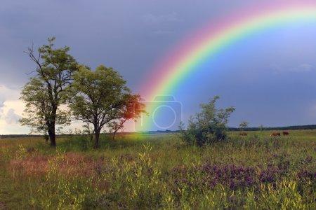 Regenbogen über Ackerland