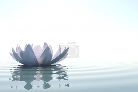 Photo for Zen flower loto in water on white background - Royalty Free Image
