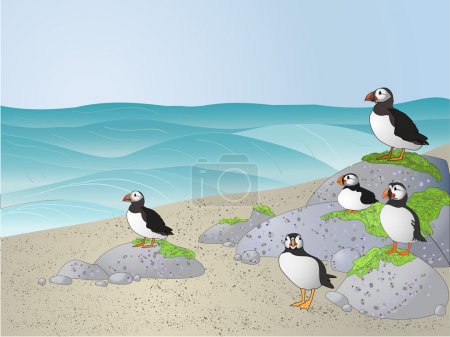 Illustration for Puffins on the beach - Royalty Free Image