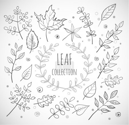 Leaves collection