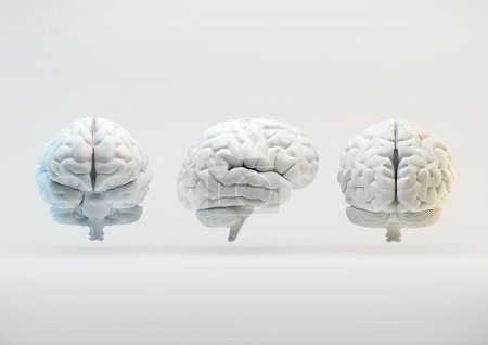Photo for 3d human brain from different angles - Royalty Free Image