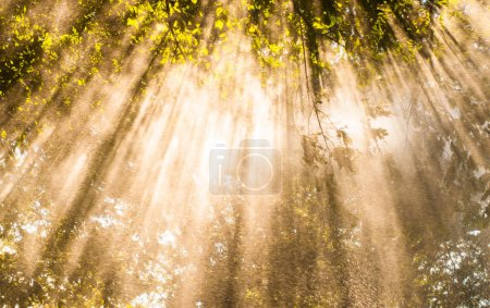 Photo for Spring shower lit up by sunlight through trees - Royalty Free Image