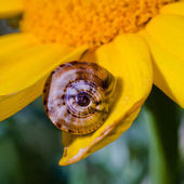 Sunny flower with snail