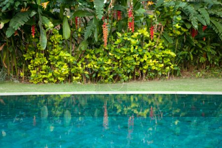 Tropical garden with swimming pool and exotic flowers.