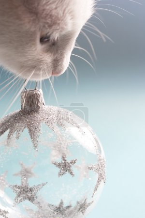 white cat holding a Christmas tree barball ornament in it's mouth against a blue background.