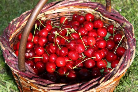 red cherry in creel