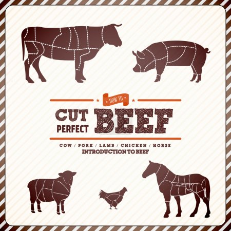 Photo for Vintage diagram guide for cutting meat - EPS10 Compatibility Required - Royalty Free Image