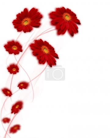 Photo for Gerbera on white background - Royalty Free Image