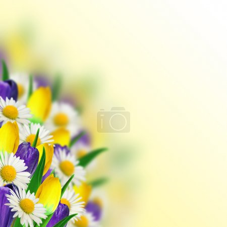 Bouquet of daisies, crocus and tulips