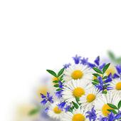 Boququet of wild flowers