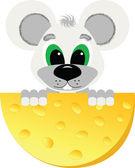 Myš jíst sýr